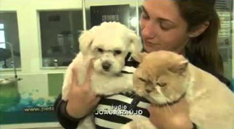 """Série """"Invasão dos Cães"""" do Jornal da BAND"""