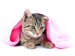 gato-secando-620x461
