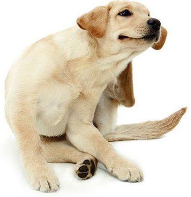 img_como_saber_se_meu_cachorro_tem_carrapatos_6452_orig