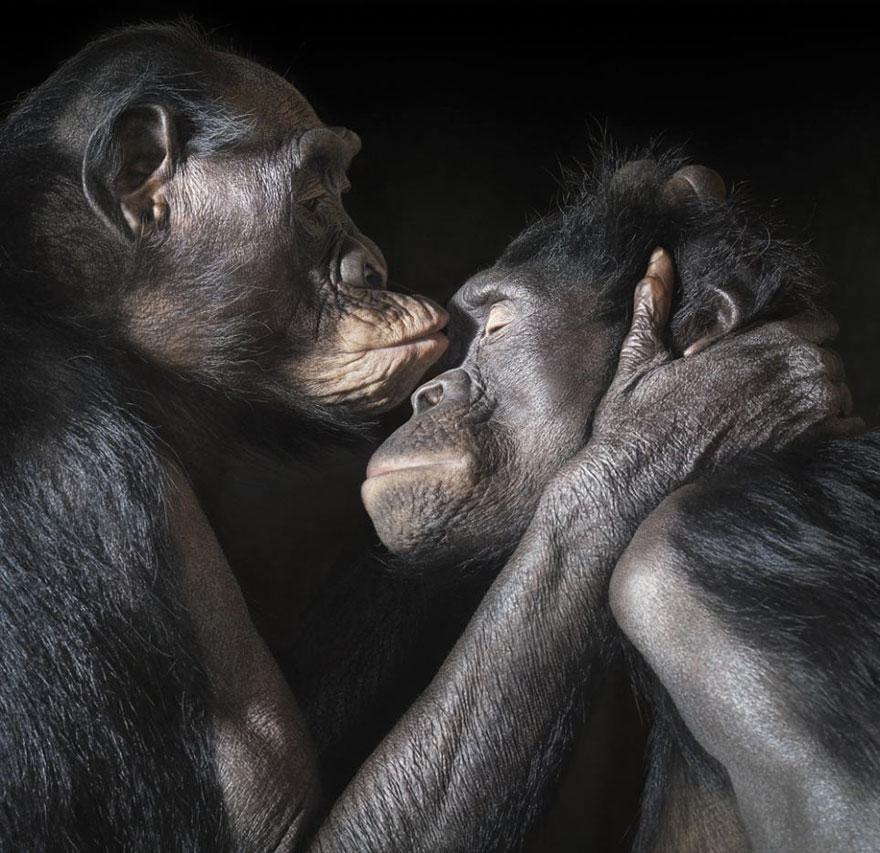 Comum entre os animais, o beijo também é um gesto de carinho