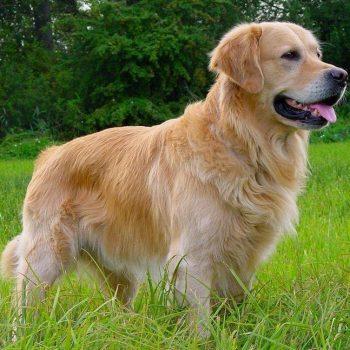 Arquivos Cães - Pet Friends - Portal de Notícias Pet - Tudo o que ... d82e2027a1