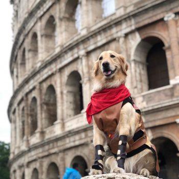viagem com cachorro